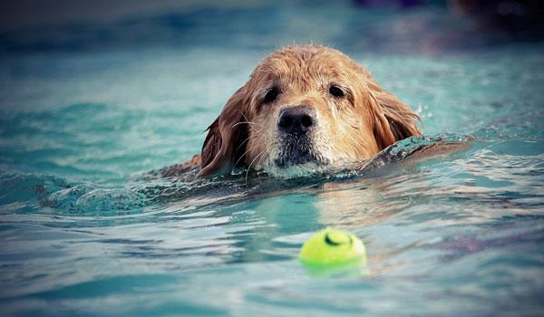 Hundeschwimmen in Wattenscheid Südfeldmark...
